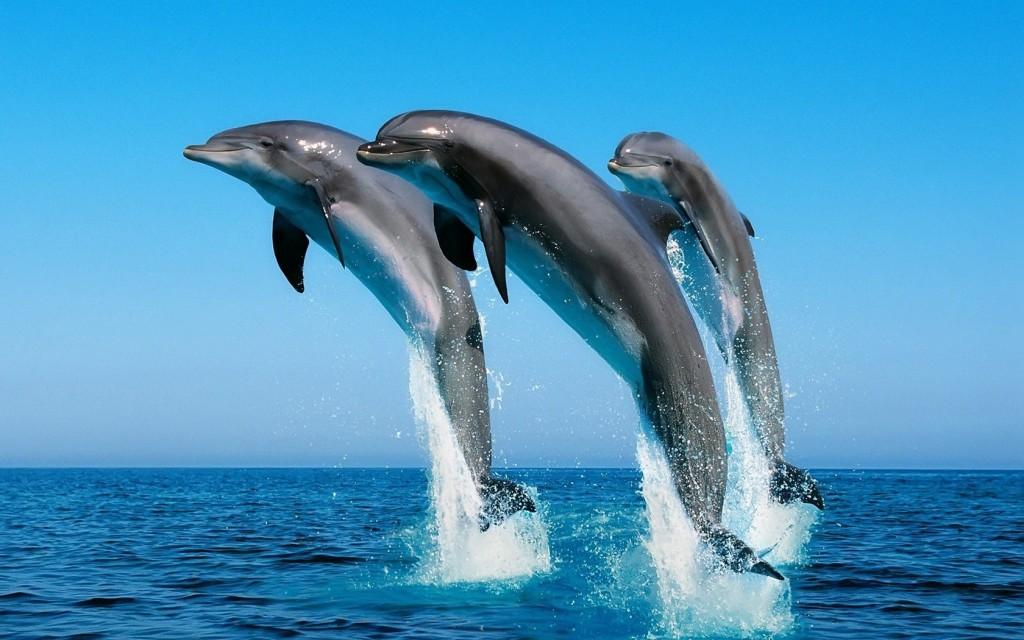 3_delfini