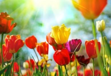 primavera_r400