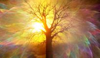 albero con riflessi arcobaleno